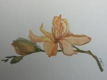 माझ्या आठवणीतला सोनचाफा (watercolor on paper)
