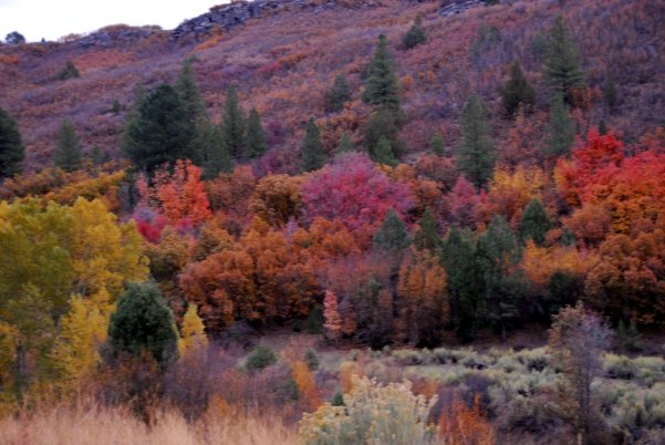 Fall Colors in Verde Valley